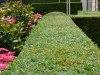 Langedijk-Tuinen-tuinaanleg-tuinontwerp-tuinonderhoud-Zwaag-11