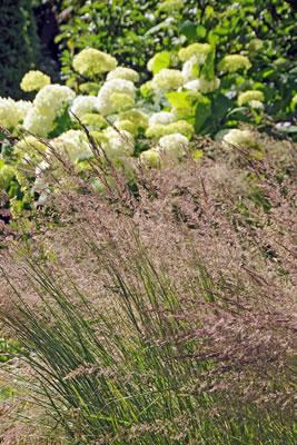 20131809_actuele_planten_gras_molinia