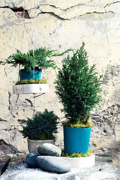 blauwe_coniferen_feat_tuinplantvandemaand2