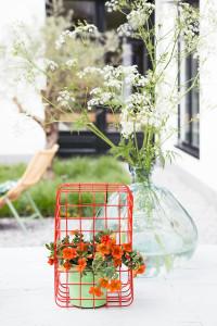 tuinplant_vd_maand_mini_petunia2