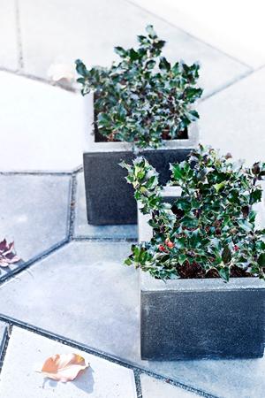 tuinplant_vd_maand_november_2