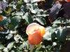 Langedijk-Tuinen-tuinonderhoud-Hoogwoud-10