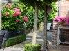 Langedijk-Tuinen-tuinaanleg-tuinontwerp-tuinonderhoud-Zwaag-00