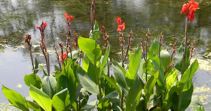 Planten in mei