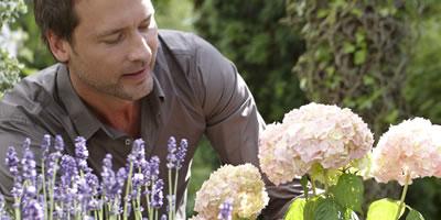 Van scheerbeurten en een blauwe tuin…