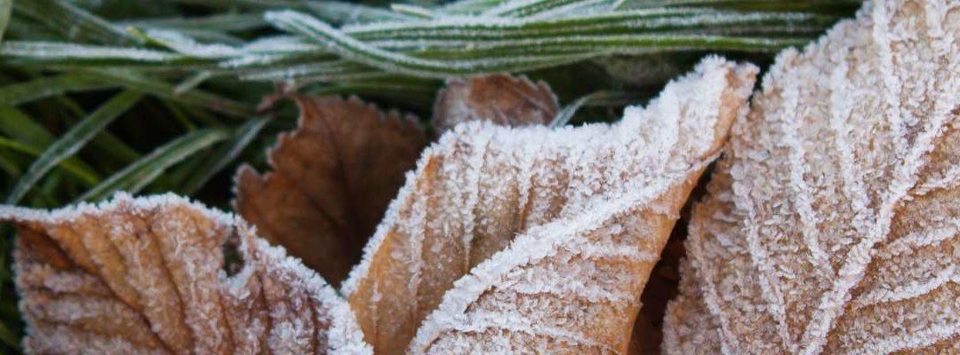 Tuintips peter langedijk tuinontwerp en tuinen for Tuinprogramma op tv